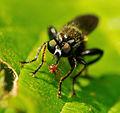 2012-06-14 15-35-21-insecte.jpg