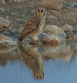 2012-giant-eagle-owl.jpg