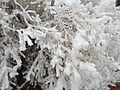 2013-12-18 07 31 02 Rime on bushes at Salt Lake City International Airport.JPG