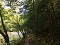 2017-08-19 11 29 27 View north along Bull Run and the Bull Run-Occoquan Trail between the Yellow Trail and the Red Trail within Hemlock Overlook Regional Park, in southwestern Fairfax County, Virginia.jpg