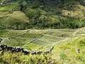 20170903 Papouasie Baliem valley 16.jpg