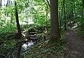 20180522160DR Dohna Naturschutzgebiet Spargrund.jpg