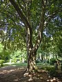 2020-06-13 LSG Melatenfriedhof Köln (NRW) 03.jpg