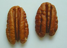 2 pecan nut halves.jpg
