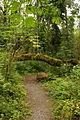 2a Flaming Geyser trail (7533523928).jpg