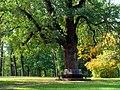 300-літній дуб біля Китайської альтанки.jpg