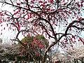 3 Chome-4 Ōta, Iwatsuki-ku, Saitama-shi, Saitama-ken 339-0052, Japan - panoramio (2).jpg