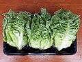 3 x Cos lettuce 2017 A2.jpg