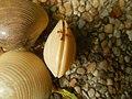 4087Ants Common houseflies foods delicacies of Bulacan 02.jpg