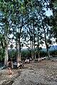 48650 Akyaka-Ula-Muğla, Turkey - panoramio (12).jpg