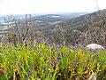 7. Morgan's View, porongurup NP.jpg