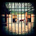 A-POIS Giuditta Nelli - Senegal 2012 - Dakar, Family in cage.JPG