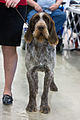 AKC Fall Dog Show 2013.jpg