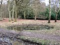 A Round Woodland Pond at Ashridge - geograph.org.uk - 1193810.jpg