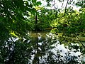 A Tree In The Middle Of The River - panoramio.jpg