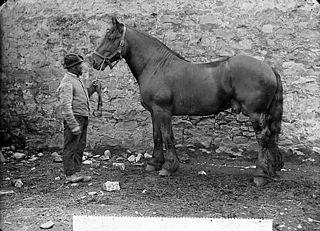 A horse (Davies)