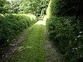 A lane by Tilquhillie Castle - geograph.org.uk - 1370092.jpg