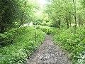 A muddy path through Ashford Chace - geograph.org.uk - 1324669.jpg
