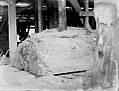 A piece of Kauri being processed (AM 75901-1).jpg
