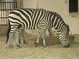 A view from kuwait zoo by irvin calicut (73).JPG