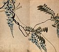 A wisteria plant; flowering stems. Watercolour. Wellcome V0043786.jpg