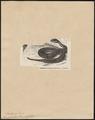 Acanthophis antarcticus - 1700-1880 - Print - Iconographia Zoologica - Special Collections University of Amsterdam - UBA01 IZ11800131.tif