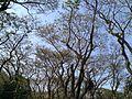 Aged tree.jpg