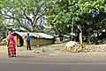 Agra 11 - Mehtab Bagh vincinity (27611399517).jpg