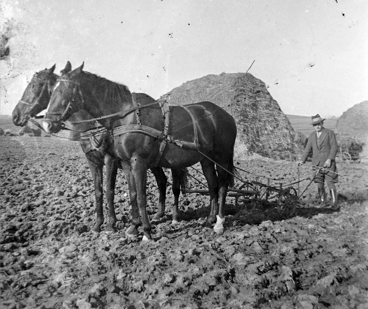 File:Agriculture, work, plowing, horse, plow Fortepan ... - photo#17