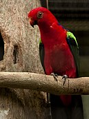 Red parrot with green wings