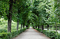 Allée jardin Schönbrunn.jpg