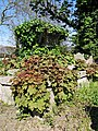 All Hallows Church Tottenham London England - churchyard chest tomb overgrown 6.jpg