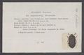 Alphitobius - Print - Iconographia Zoologica - Special Collections University of Amsterdam - UBAINV0274 027 38 0008.tif