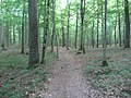 Alytus, Lithuania - panoramio (15).jpg