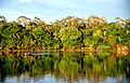 Amazonia.jpg