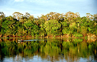 Amazon rainforest Rainforest in South America