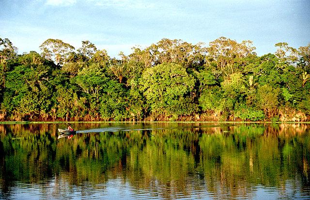 V tropickom dažďovom pralese sú dobré podmienky pre život, preto je tam veľká druhová pestrosť