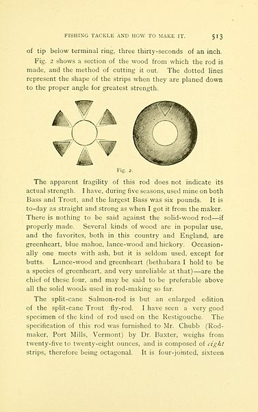 File:American game fishes (Page 513, Fig. 2) BHL8309789.jpg