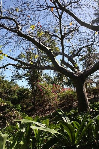 Andromeda Gardens - Image: Andromeda Botanical Gardens 04