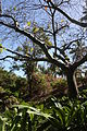 Andromeda Botanical Gardens 04.jpg