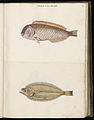 Animal drawings collected by Felix Platter, p1 - (63).jpg