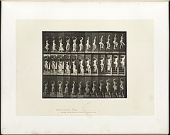 Animal locomotion. Plate 105 (Boston Public Library).jpg