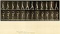 Animal locomotion. Plate 27 (Boston Public Library).jpg