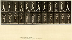 Animal locomotion. Plate 27 (Boston Public Library).jpg