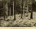 Annual report (1901) (14563500848).jpg