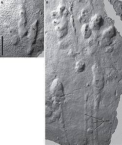 Anomoepus and Grallator.jpg