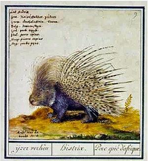 Anselmus de Boodt - IJzerverken, drawing by Anselmus de Boodt