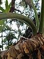 Ants on tree.jpg