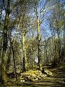 April Hochschwarzwald Freiburg im Breisgau Zähringen 1000 mtr - Mythos Black Forest Photography 2013 - panoramio.jpg