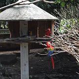 Sapucaia do Sul – Wikipédia, a enciclopédia livre